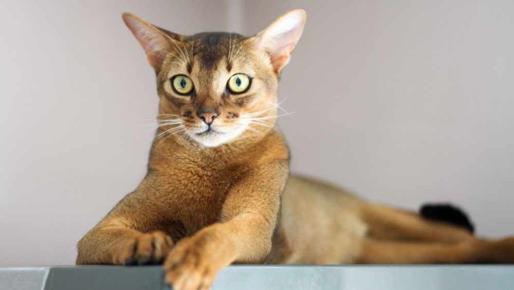 4 Cats 2 - We welcome you to visit 4cats2 for the latest Cat News, Funny cats Movies, Supplies for your Cat or Kitten, Cat articles and more!
