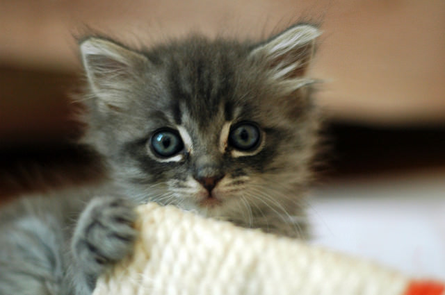 Learn How to raise a Kitten