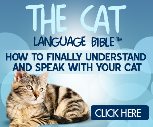 Learn how to talk cat